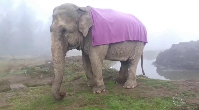 Elefanta Ramba foi resgatada de circo e vivia em reserva ecológica — Foto: TV Globo