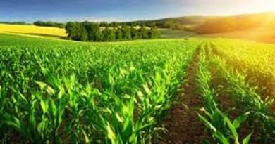 produtores agronegocio