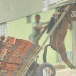 Burro fica pendurado em carroça por conta de excesso de peso