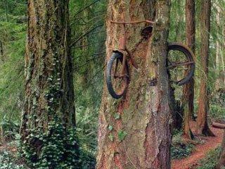 bici albero
