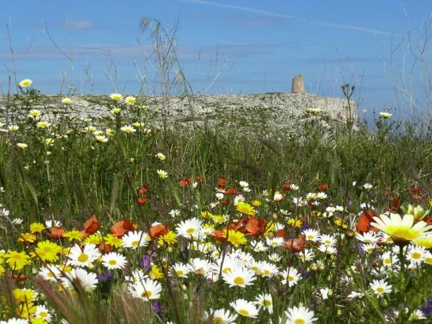 aree prative in piena fioritura in  località S Emiliano, Parco Naturale Regionale Otranto S.M. di Leuca, bosco di Tricase (ph Roberto Gennaio)