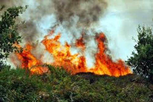 Da google immagini: Incendio ad Olmeto, La voce di Alghero, www.vocedialghero.it
