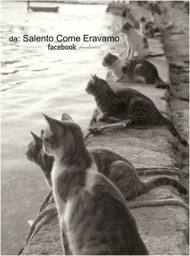 Gli animali nei proverbi salentini  (1/x): la gatta