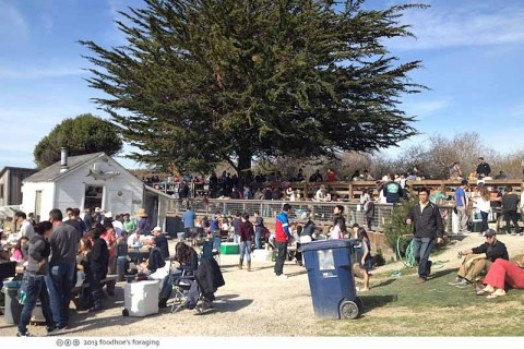 tomales_crowds