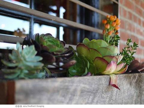 td_succulents