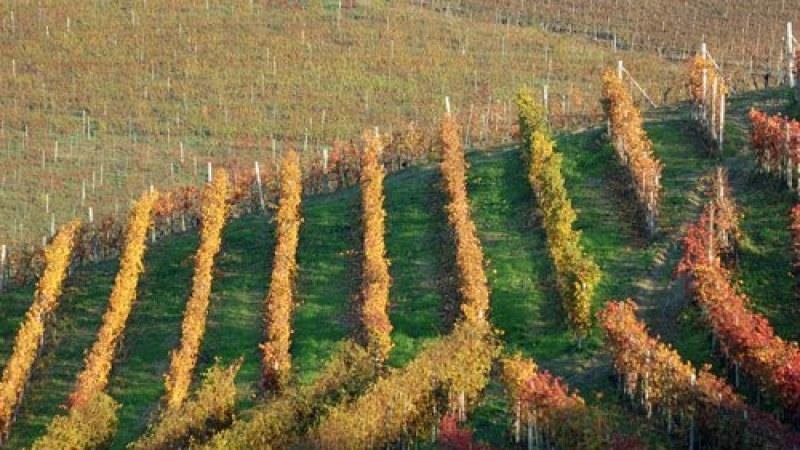 Roagna harvest photo