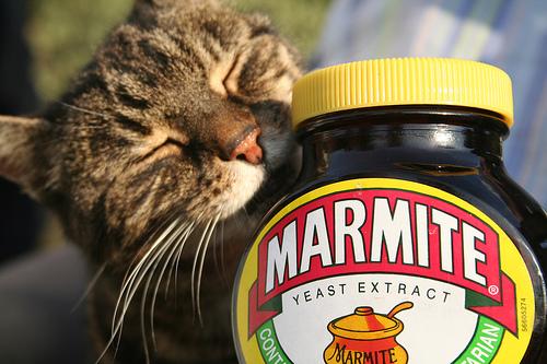 Cat Marmite