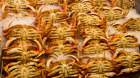 Dungeness crab could be deadly this season, and we don't mean deadly delicious.