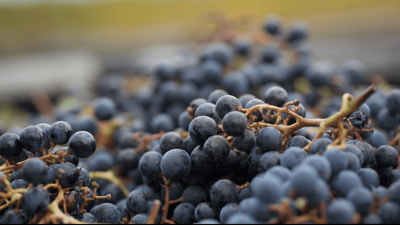Around The World In 80 Wine Varietals: Cabernet Franc