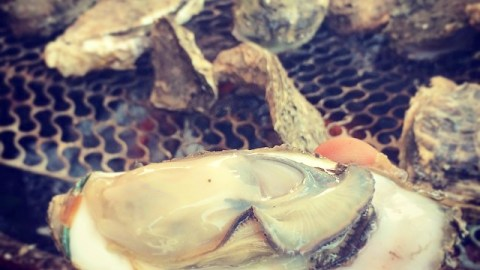 The Freshest Oysters You've Ever Eaten Are Growing In Taijian, Taiwan