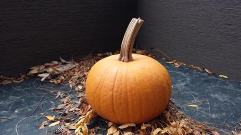 sugar pumpkin by Linnea Covington