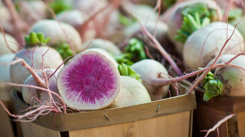 Beauty_Heart_radish_by_The Department of Agriculture