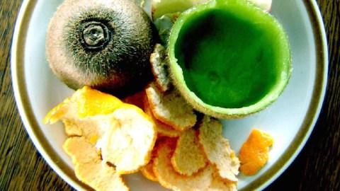 zera food recycler