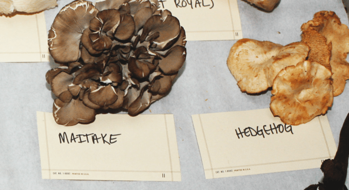 Japanese maitake mushrooms
