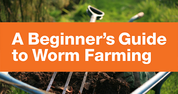 A Beginners Guide to Worm Farming