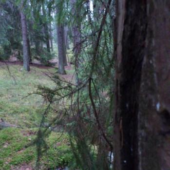 En bild från gårdagens walk rakt in i skogen där det inte var is