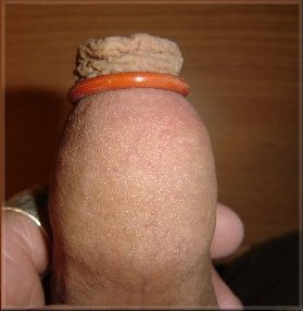 mister mark silicone penis