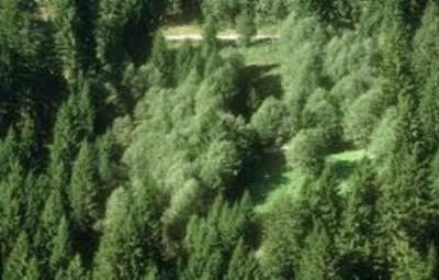 boschi foreste
