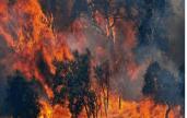 incendi44
