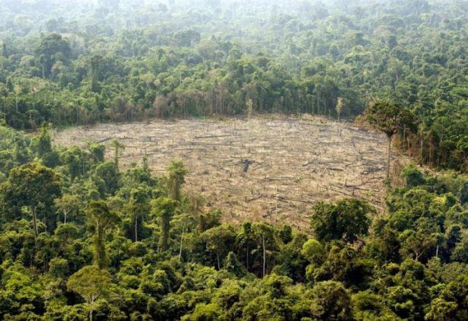 l43-deforestazione-foresta-amazzonica-131115103348_big