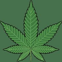 Use Medical Marijuana Boulder to Get Rid of Various Diseases (2)