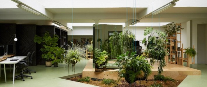 Benefits Of Having Indoor Plants For Your House