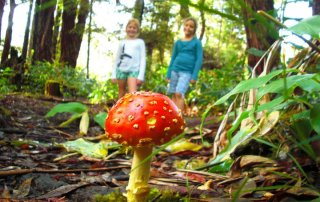 A wild mushroom, likely an Amanita muscaria, is seen here at the Berry Flat trail in Koke'e.