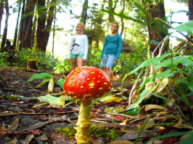 Explore the Magical, Mysterious World of Mushrooms Sunday