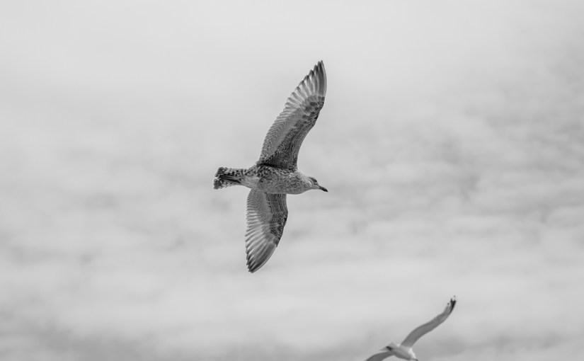 Earn Wings