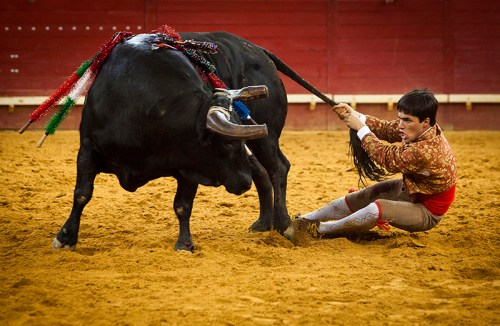 Rabujador closes the performance: João Madeira, member of the Forcados group of Évora, acts as the 'rabujador' pulling the tail and riding in circles with the bull to close the performance, Évora arena, Portugal.
