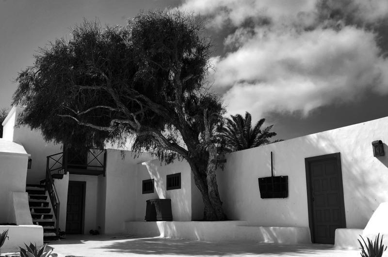 Blanco, sombras y arbol. (RAFAEL PAJARES GONZALEZ)