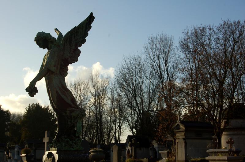 Perfil de angel (RAFAEL PAJARES GONZALEZ)