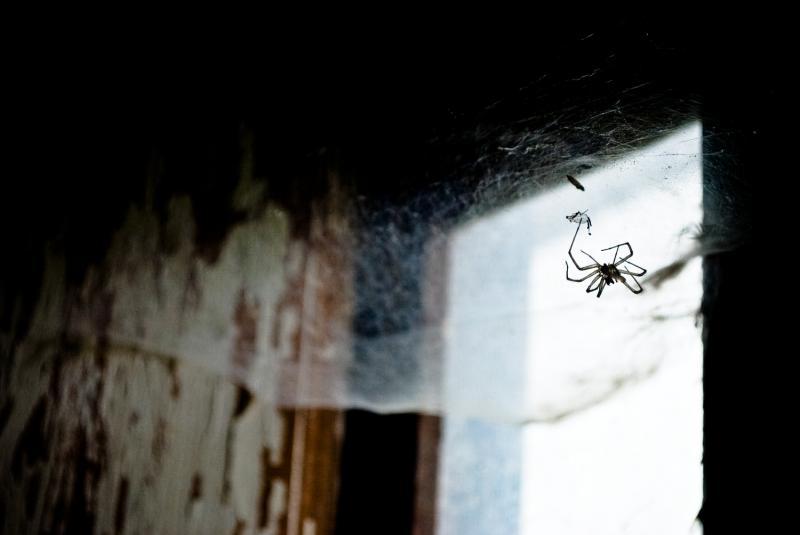 Araña a contraluz (jorge zeballos briones)