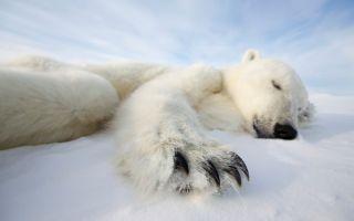 © Brutus Östling. Canon WWF