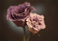 Blumen kreativ fotografieren