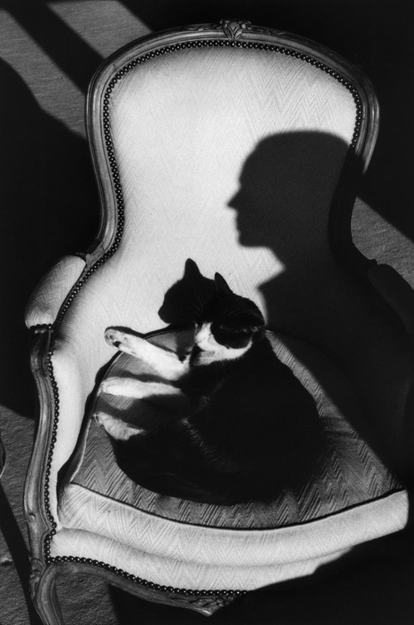 """Our cat Ulysses and Martine's shadow"". 1989."