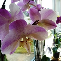 How to take care of orchids?