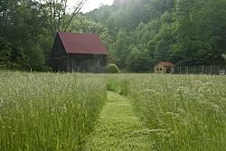 pasturegrass.jpg