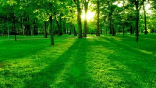 Nature Status And Quotes For Whatsapp