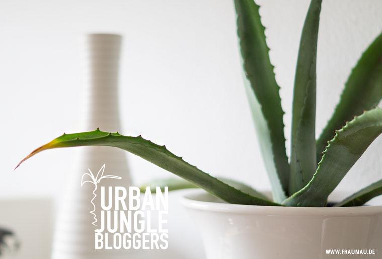 Urban Jungle Bloggers Plantshelfie und der Kampf mit den Trauermücken by fraumau