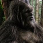 Sasquatch spotted in Tofino Canada