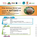 vignette-fiche_abricot_antonio