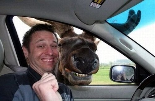 moose taking a photo, professional investors