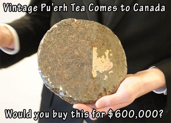 15-03-puerh-tea-vintage-tea-600000-vancouver