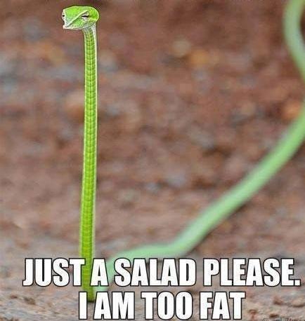 16-07-thin-salad-food