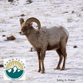 Grand Teton National Park Foundation