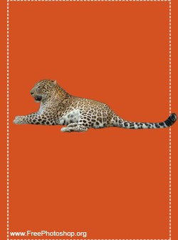 Leopard PSD Free Downloads And Add Ons For Photoshop