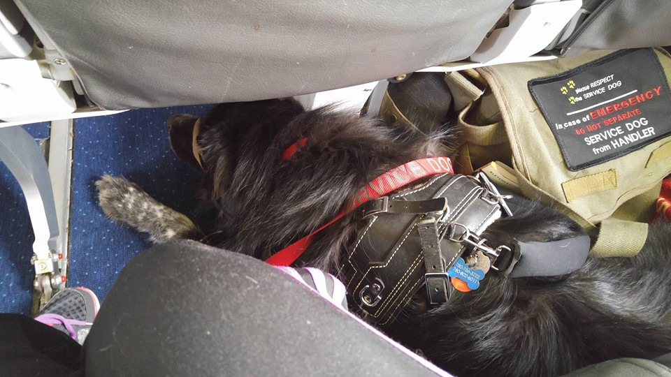 air travel with a service dog