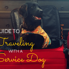 Guide to Traveling with a Service Dog