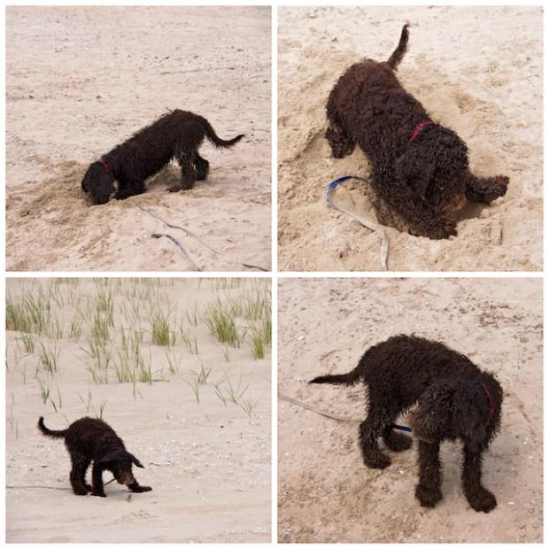 Kabir dans le sable